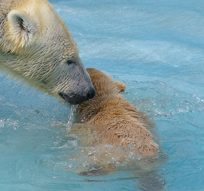 クー初泳ぎ