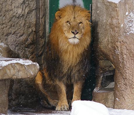 円山動物園 リッキー