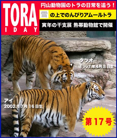 円山動物園 アムールトラ タツオ アイ