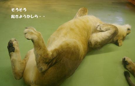 円山動物園 ライオン ティモン
