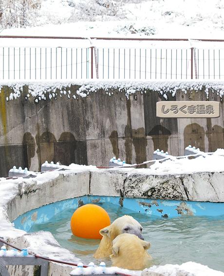 円山動物園 イコロ キロル ララ