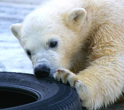 タイヤに夢中