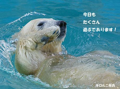 円山動物園 ホッキョクグマ キロル
