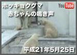 ホッキョクグマの赤ちゃんの鳴き声