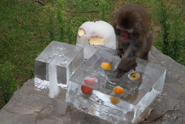 氷の中果物