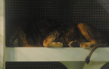 リッキー寝る