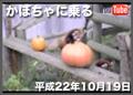 かぼちゃに乗る