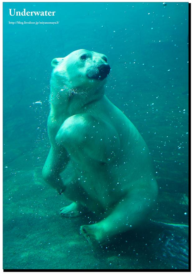 水中おっちゃんこ