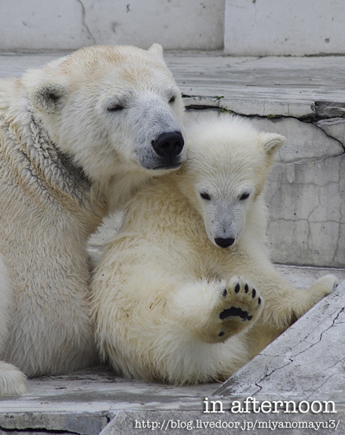 ララと赤ちゃん