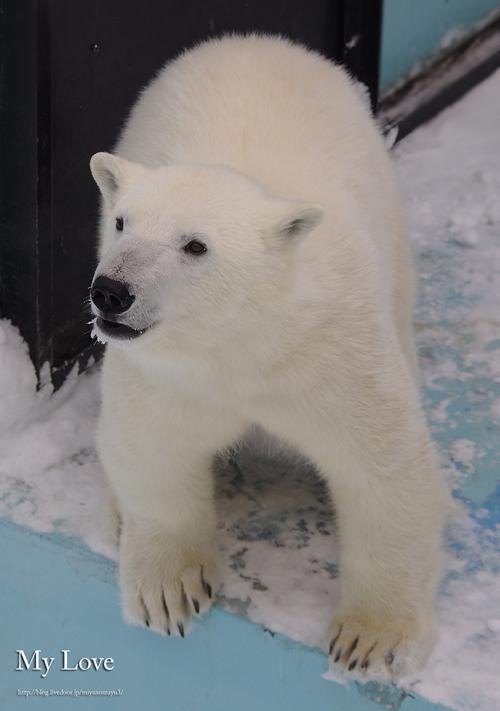 アイラおびひろ動物園 公開初日