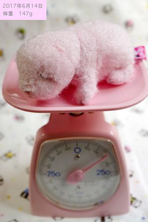 14日体重